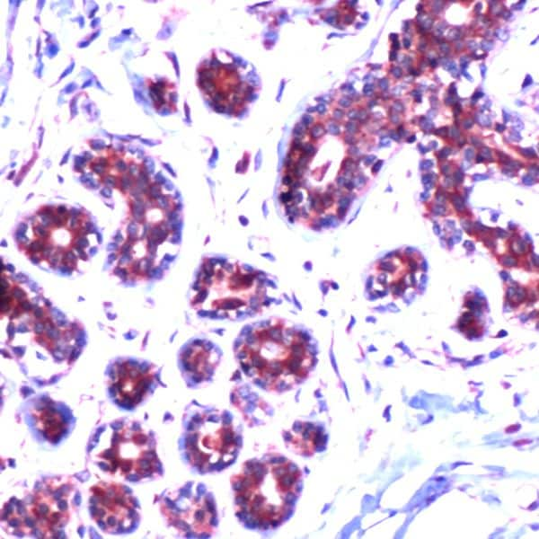 Immunohistochemistry (Formalin/PFA-fixed paraffin-embedded sections) - Anti-Bax antibody (ab227754)