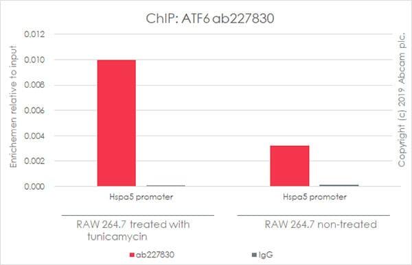ChIP - Anti-ATF6 antibody [EPR22690-84] (ab227830)