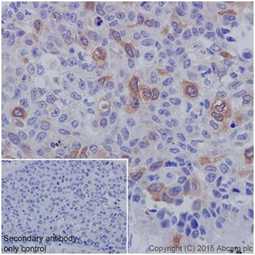 Immunohistochemistry (Formalin/PFA-fixed paraffin-embedded sections) - Anti-Cyclin B1 antibody [EPR17060] - BSA and Azide free (ab227844)