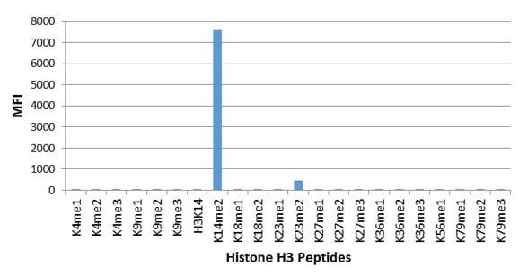 Multiplex Protein Detection - Anti-Histone H3 (di methyl K14) antibody [RM165] (ab227874)