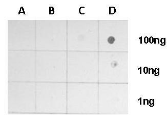 Dot Blot - Anti-Histone H4 (tri methyl K20) antibody (ab227884)