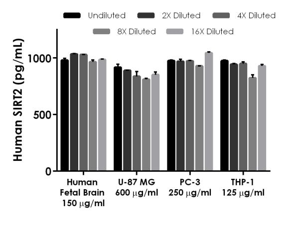 Interpolated concentrations of native SIRT2 in Human Fetal Brain Homogenate Extract, U-87 MG Extract, PC-3 Extract, and THP-1 Extract.