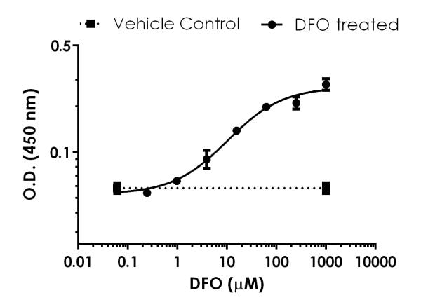 Dose-dependent induction of HIF-2-alpha in HELA cells by deferoxamine (DFO)