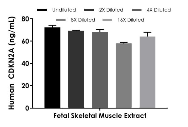 Interpolated concentrations of spiked CDKN2A in Human Fetal Skeletal Muscle tissue homogenate extract based on a 250 µg/mL extract load