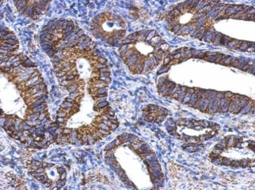 Immunohistochemistry (Formalin/PFA-fixed paraffin-embedded sections) - Anti-ALDH1A1 antibody (ab227964)