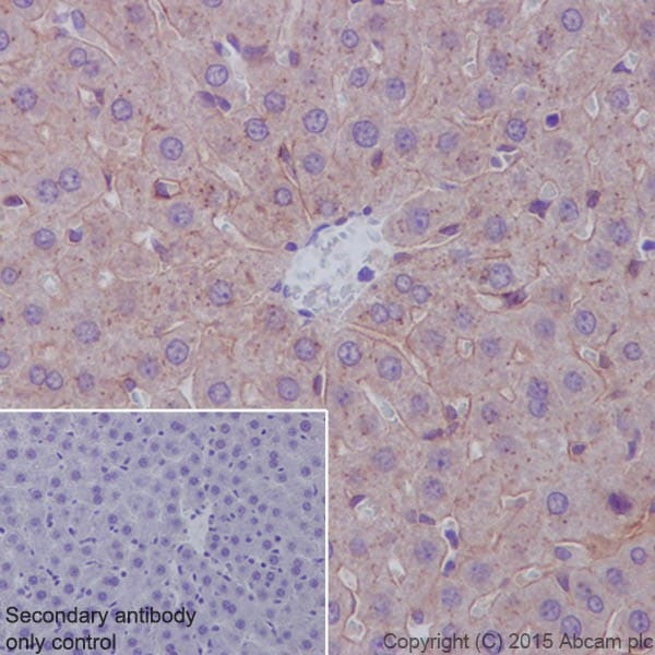 Immunohistochemistry (Formalin/PFA-fixed paraffin-embedded sections) - Anti-Apolipoprotein E antibody [EPR19392] - Low endotoxin, Azide free (ab227993)