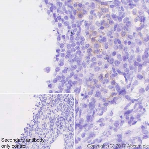 Immunohistochemistry (Formalin/PFA-fixed paraffin-embedded sections) - Anti-INSL3 antibody [EPR20747] - BSA and Azide free (ab228459)