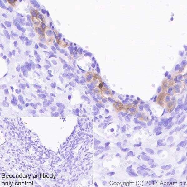 Immunohistochemistry (Formalin/PFA-fixed paraffin-embedded sections) - Anti-INSL3 antibody [EPR20739] - BSA and Azide free (ab228460)