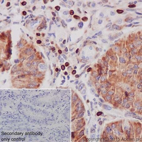 Anti-Bcl-2 antibody [EPR17509]