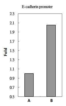 ChIP - Anti-Smad2 antibody (ab228807)