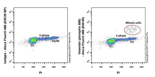Flow Cytometry - Anti-Vimentin (phospho S56) antibody [EPR21084] - BSA and Azide free (ab228854)