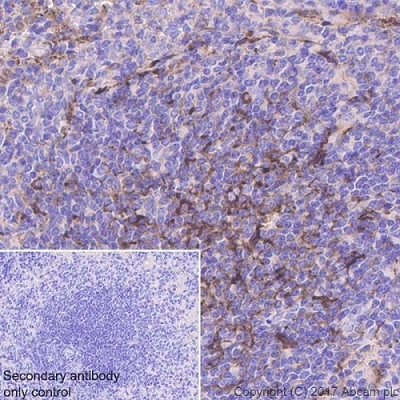 Immunohistochemistry (Formalin/PFA-fixed paraffin-embedded sections) - Anti-Clusterin beta chain antibody [EPR17538-101] - BSA and Azide free (ab229127)