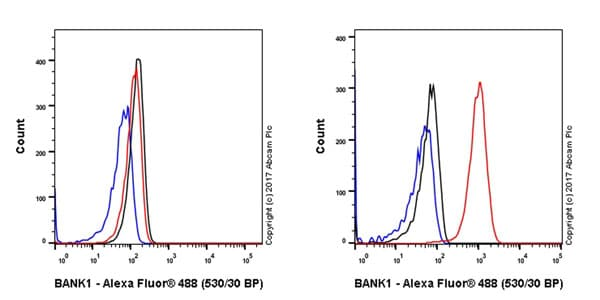 Flow Cytometry - Anti-BANK1 antibody [EPR20795] (ab229189)