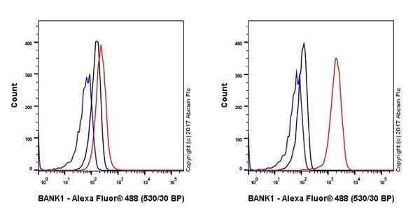 Flow Cytometry - Anti-BANK1 antibody [EPR20788] (ab229190)