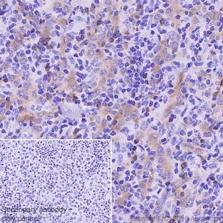Immunohistochemistry (Formalin/PFA-fixed paraffin-embedded sections) - Anti-BANK1 antibody [EPR20788] (ab229190)