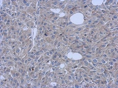 Immunohistochemistry (Formalin/PFA-fixed paraffin-embedded sections) - Anti-FCHO1 antibody - C-terminal (ab229255)