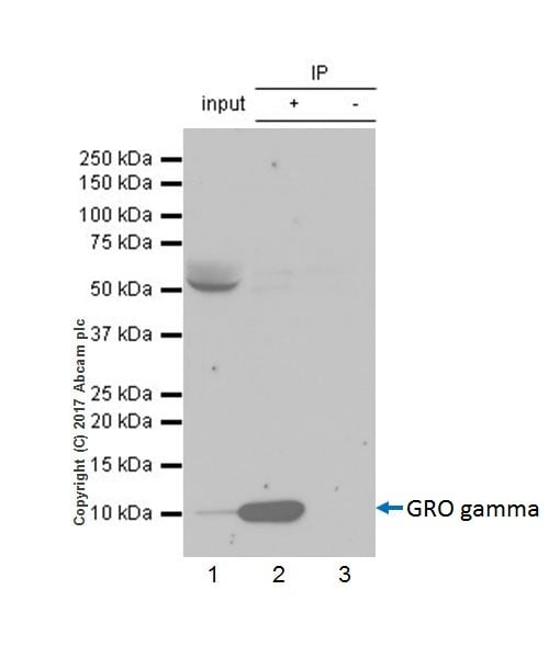 Immunoprecipitation - Anti-GRO gamma antibody [EPR18170-142] - BSA and Azide free (ab229376)