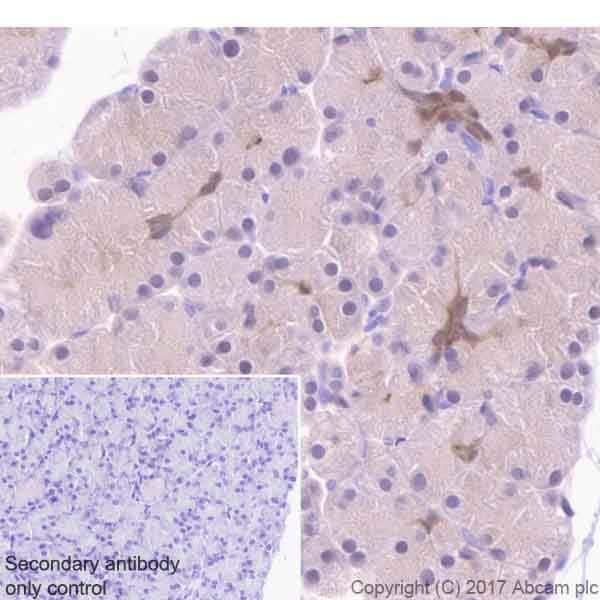 Immunohistochemistry (Formalin/PFA-fixed paraffin-embedded sections) - Anti-ENO1 antibody [EPR19758] - BSA and Azide free (ab229378)