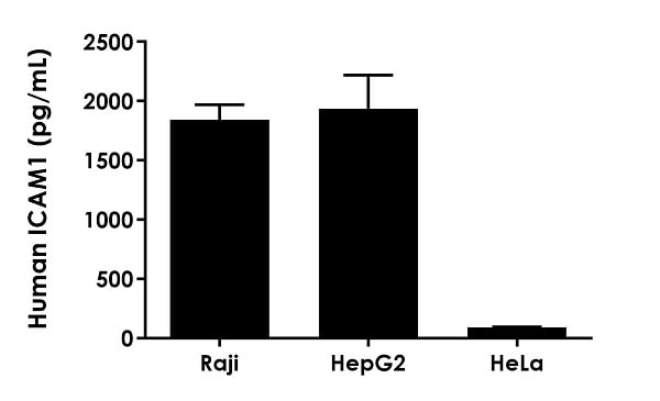 Comparison of ICAM-1 levels in three human cell culture lysates.