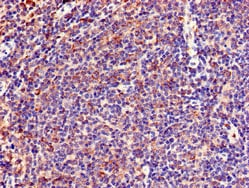 Immunohistochemistry (Formalin/PFA-fixed paraffin-embedded sections) - Anti-Lnx1 antibody (ab229762)