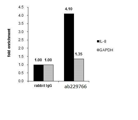 ChIP - Anti-MAFK antibody (ab229766)