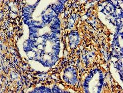Immunohistochemistry (Formalin/PFA-fixed paraffin-embedded sections) - Anti-HtrA2 / Omi antibody - C-terminal (ab229878)