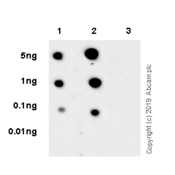 Dot Blot - Anti-TrkB (phospho Y705) antibody [EPR22298-67] (ab229908)