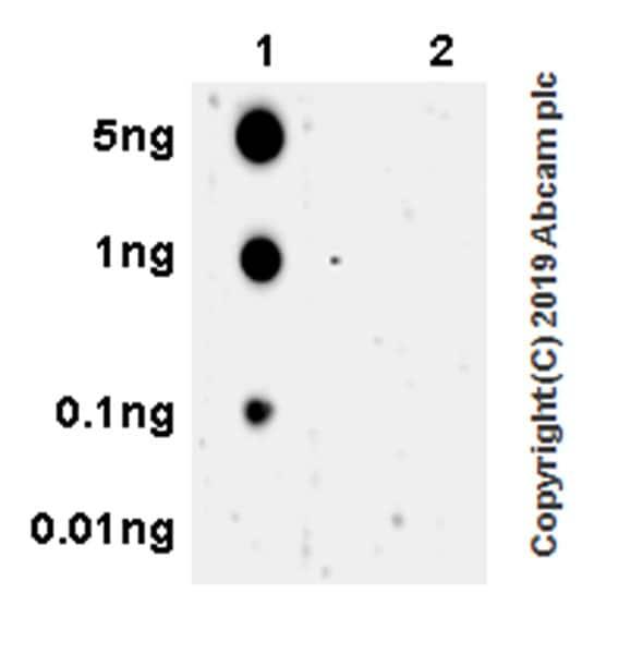Dot Blot - Anti-ULK1 (phospho S757) antibody [EPR22265-9] (ab229909)