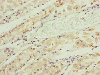 Immunohistochemistry (Formalin/PFA-fixed paraffin-embedded sections) - Anti-RNF135 antibody (ab229959)