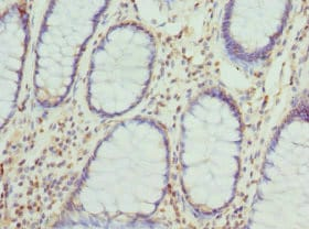 Immunohistochemistry (Formalin/PFA-fixed paraffin-embedded sections) - Anti-Cytohesin 2 antibody (ab229994)