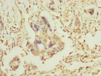 Immunohistochemistry (Formalin/PFA-fixed paraffin-embedded sections) - Anti-TOMM34 antibody (ab230103)