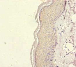 Immunohistochemistry (Formalin/PFA-fixed paraffin-embedded sections) - Anti-REEP5 antibody (ab230123)