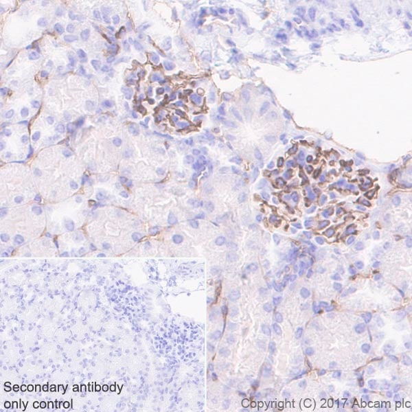 Immunohistochemistry (Formalin/PFA-fixed paraffin-embedded sections) - Anti-CD38 antibody [EPR21079] - BSA and Azide free (ab230153)