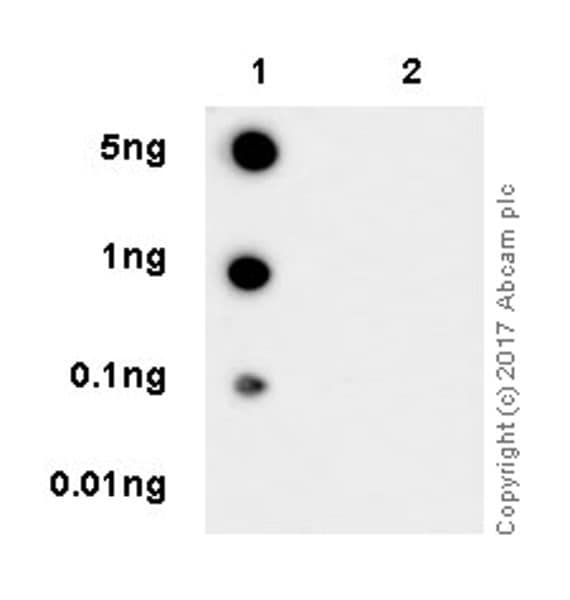 Dot Blot - Anti-eNOS (phospho S1177) antibody [EPR20991] - BSA and Azide free (ab230158)