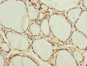 Immunohistochemistry (Formalin/PFA-fixed paraffin-embedded sections) - Anti-NEDD1 antibody (ab230254)