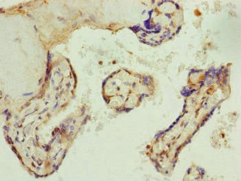 Immunohistochemistry (Formalin/PFA-fixed paraffin-embedded sections) - Anti-AP1M1 antibody (ab230273)