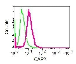 Flow Cytometry - Anti-CAP2 antibody [EPR6378] - BSA and Azide free (ab230284)