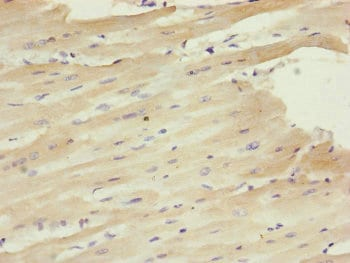 Immunohistochemistry (Formalin/PFA-fixed paraffin-embedded sections) - Anti-Centrin 1 antibody (ab230332)