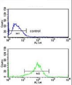 Flow Cytometry - Anti-IB-1 antibody (ab230341)