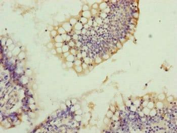 Immunohistochemistry (Formalin/PFA-fixed paraffin-embedded sections) - Anti-TRIM10 antibody (ab230409)
