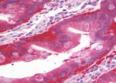 Immunohistochemistry (Formalin/PFA-fixed paraffin-embedded sections) - Anti-MRPS9 antibody (ab230426)