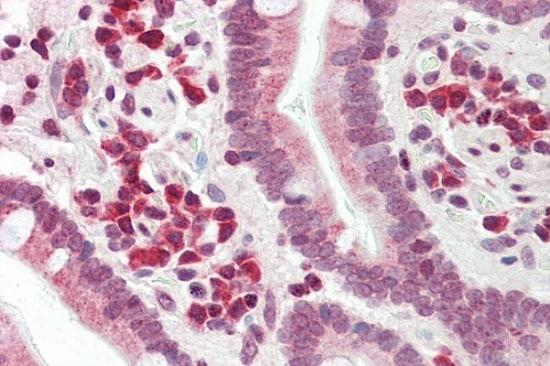 Immunohistochemistry (Formalin/PFA-fixed paraffin-embedded sections) - Anti-DERL1/Derlin-1 antibody (ab230491)