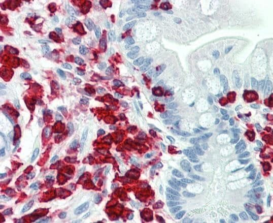 Immunohistochemistry (Formalin/PFA-fixed paraffin-embedded sections) - Anti-PON2 antibody (ab230503)