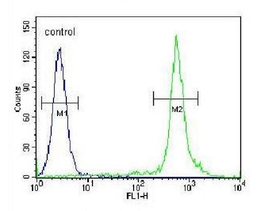 Flow Cytometry - Anti-TTF1 antibody - N-terminal (ab230548)