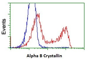 Flow Cytometry - Anti-Alpha B Crystallin antibody [6D11] (ab230722)