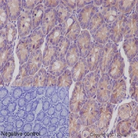 Immunohistochemistry (Formalin/PFA-fixed paraffin-embedded sections) - Anti-IKK gamma/NEMO antibody [EPR16629] - BSA and Azide free (ab230832)