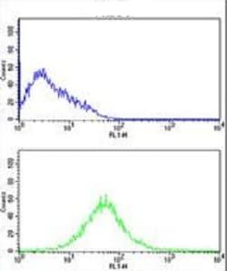 Flow Cytometry - Anti-NKG2C antibody - N-terminal (ab230900)