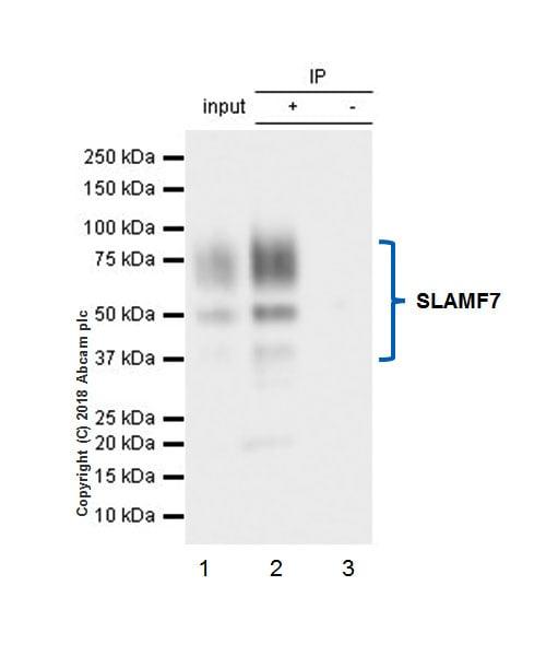 Immunoprecipitation - Anti-SLAMF7/CS1 antibody [EPR21155] (ab230945)