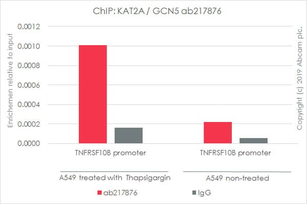 ChIP - Anti-KAT2A / GCN5 antibody [EPR21146] - BSA and Azide free (ab231075)
