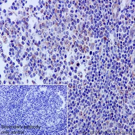 Immunohistochemistry (Formalin/PFA-fixed paraffin-embedded sections) - Anti-HADHA antibody [EPR17940] - BSA and Azide free (ab231169)